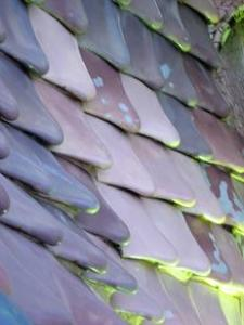Casa Batllo fish scales